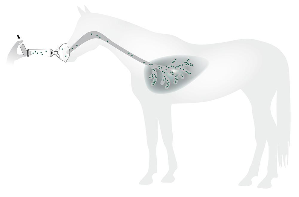 Wirkprinzip Medikamenteninhalation bei Pferden